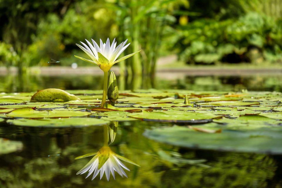 Buďte jako rostliny